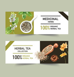 Herbal tea banner design with basil peppermint vector