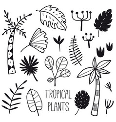 tropical plants and leaves set vector image