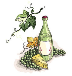 Watercolor bottle of wine grapes and cheese vector