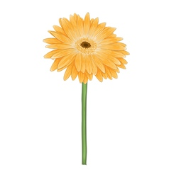 yellow gerbera with watercolor effect isolated vector image vector image