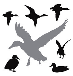 Ducks collection vector