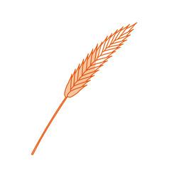 Oktoberfest concept with ears of barley vector
