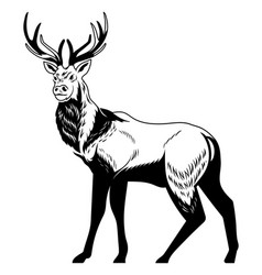 forest wild deer on isolated white background vector image