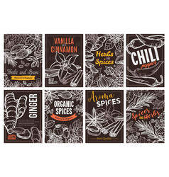 sketch design templates herbs and spices vector image