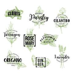 Spices and herbs lettering labels vector