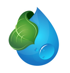 a drop of water and green leaf vector image vector image