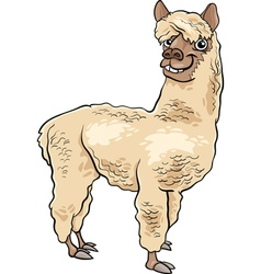 Alpaca animal cartoon vector