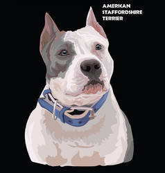 colorful american staffordshire terrier portrait vector image