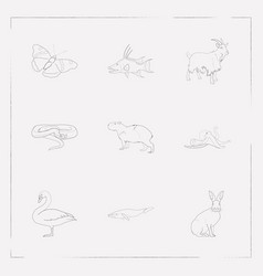 Set of zoo icons line style symbols with butterfly vector