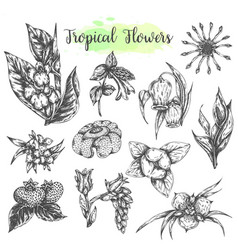 tropical flowers and leaves isolated hand drawn vector image