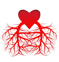 The heart and the veins vector image vector image