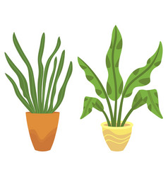 Houseplant in vases flowers with flourishing vector