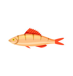 perch fish isolated icon vector image vector image