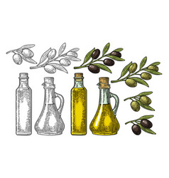 bottle glass oil with cork stopper and branch vector image