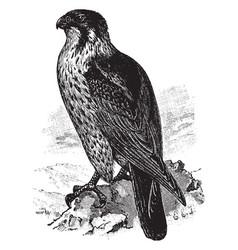 Duck hawk vintage vector