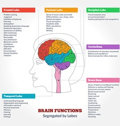 Human brain anatomy and functions vector