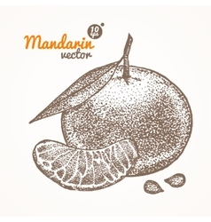 Mandarin Card Hand Draw Sketch vector
