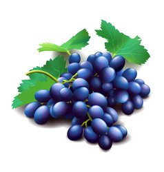 Realistic purple grapes bunch with green leaves vector