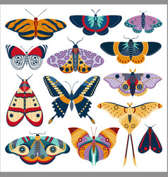 Tropic butterfly and exotic moth colored set vector