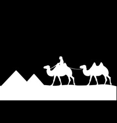Man on the camel of the pyramids vector