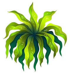 A topview of a green plant vector