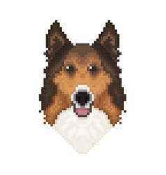 collie dog head in pixel art style vector image