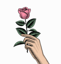 Hand with a rose vector