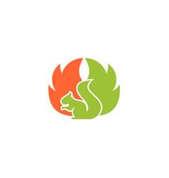 squirrel logo template vector image