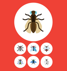Flat icon fly set of housefly mosquito hum and vector