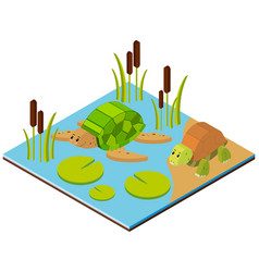 pond scene with two turtles in 3d design vector image