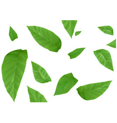 tobacco leaves background vector image