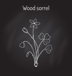 Wood sorrel wild flower vector