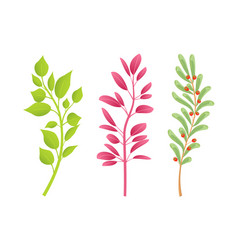 branches of plants with green and red leaves set vector image