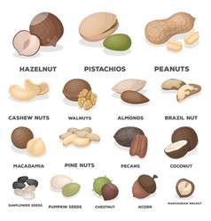 Different kinds of nuts cartoon icons in set vector