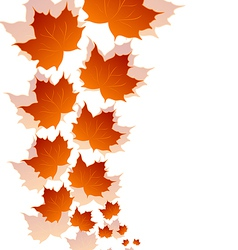Autumn maple leaves isolated on white background vector image vector image