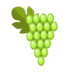 Green wet Isabella grapes bunch vector