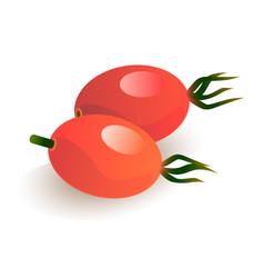 Rose hip berries vector