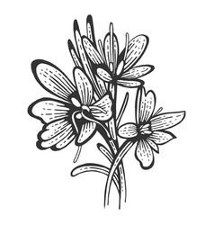 saffron flower spice sketch engraving vector image