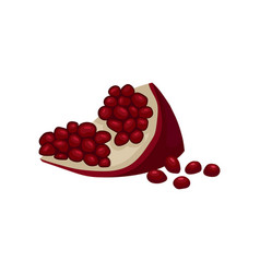 small slice of sweet pomegranate with juicy seeds vector image