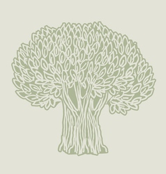 olive tree poster vector image