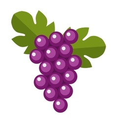 Blue wet Isabella grapes bunch vector image