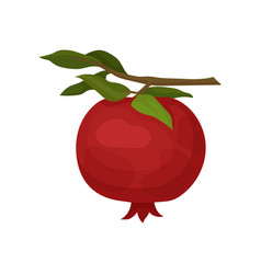 red ripe pomegranate hanging on small branch with vector image