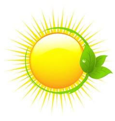 Sun with leafs vector