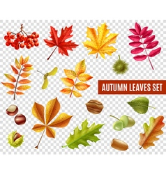 Autumn Leaves Transparent Set vector image