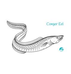 conger eel hand-drawn vector image