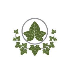 Ivy leaf design vector