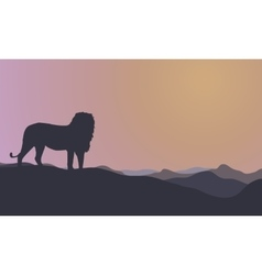 Landscape lion silhouettes at morning vector image