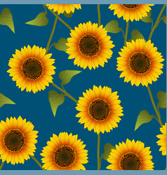 orange yellow sunflower on indigo blue background vector image