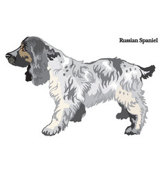 Russian spaniel vector