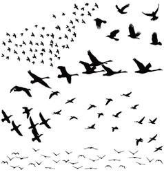 silhouette a flock birds vector image